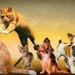 Pet Spirit Release Ceremony